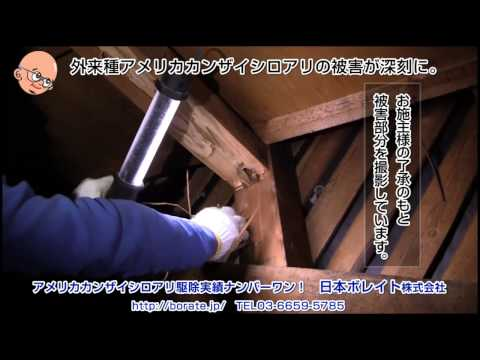 アメリカカンザイシロアリによる被害の現状、屋根裏