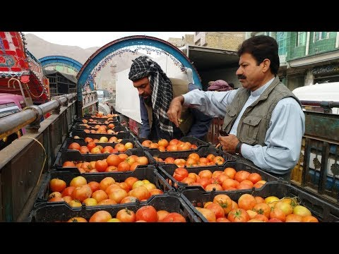 Tomatoes: once in surplus, now a rarity - BBCURDU