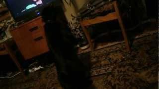 кошка испугалась