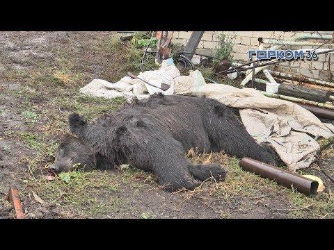 В Семилуках из частного зоосада сбежал медведь