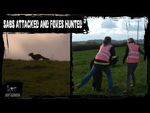 Foxes Saved, Sabs Attacked And Biased Police