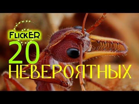 Топ 20 Невероятных / фактов / о муравьях / жизнь / насекомых / на воле / ферма / интересных