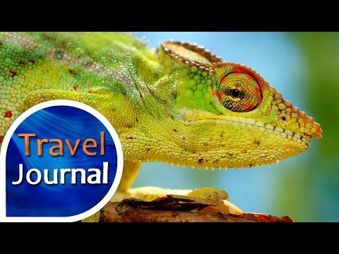 Travel Journal (153) - S M.Foktem na ostrově Reunion