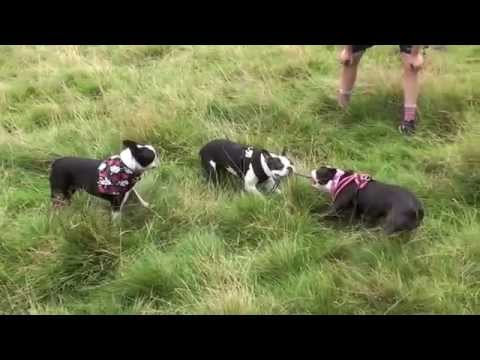 Angriest Puppy - YouTube