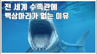 전 세계 수족관의 상어 중 유독 백상아리가 없는 이유