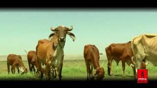 गौ माता भजन  | Ek Gau Mata Ka Dard | Sandeep Yadav | Priya Music