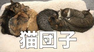 鳴くまると集まって寝てる猫たち