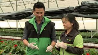 Cách trồng các loại hoa