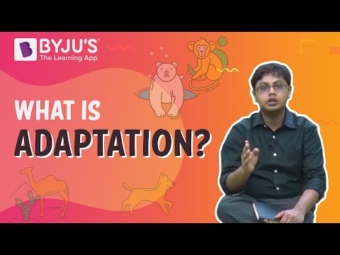 What Is Adaptation Definition Types Importance Of Adaptation
