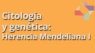Herencia Mendeliana I - Citología y Genética - Educatina