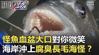 怪魚血盆大口對你「露齒微笑」…菲律賓海岸沖上腐臭「長毛」海怪!? 關鍵時刻 20180514-3 黃創夏