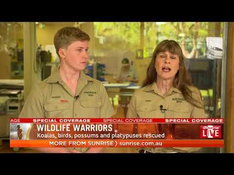 English Evan - The Irwins Save 90,000 Animals in Australia!