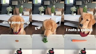 ASMR Dog Reviewing Different Types of Food - Tucker Taste Test #3