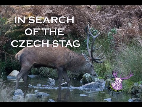 IN SEARCH OF THE CZECH STAG