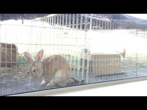 Rabbits react to classical music