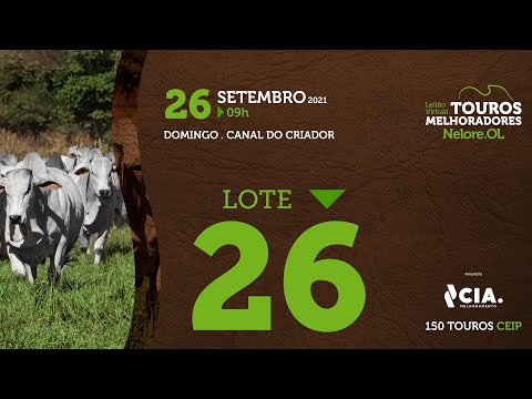 LOTE 26 - LEILÃO VIRTUAL DE TOUROS 2021 NELORE OL - CEIP