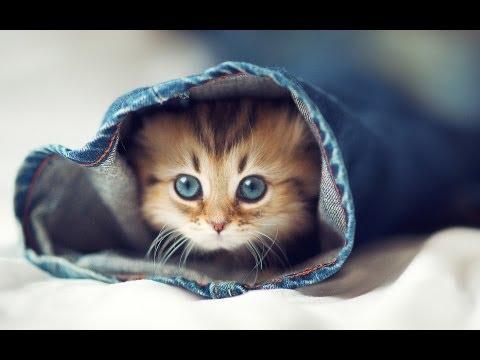 Cute Cats — Cutest Kitten ★ Best Compilation Ever ღ