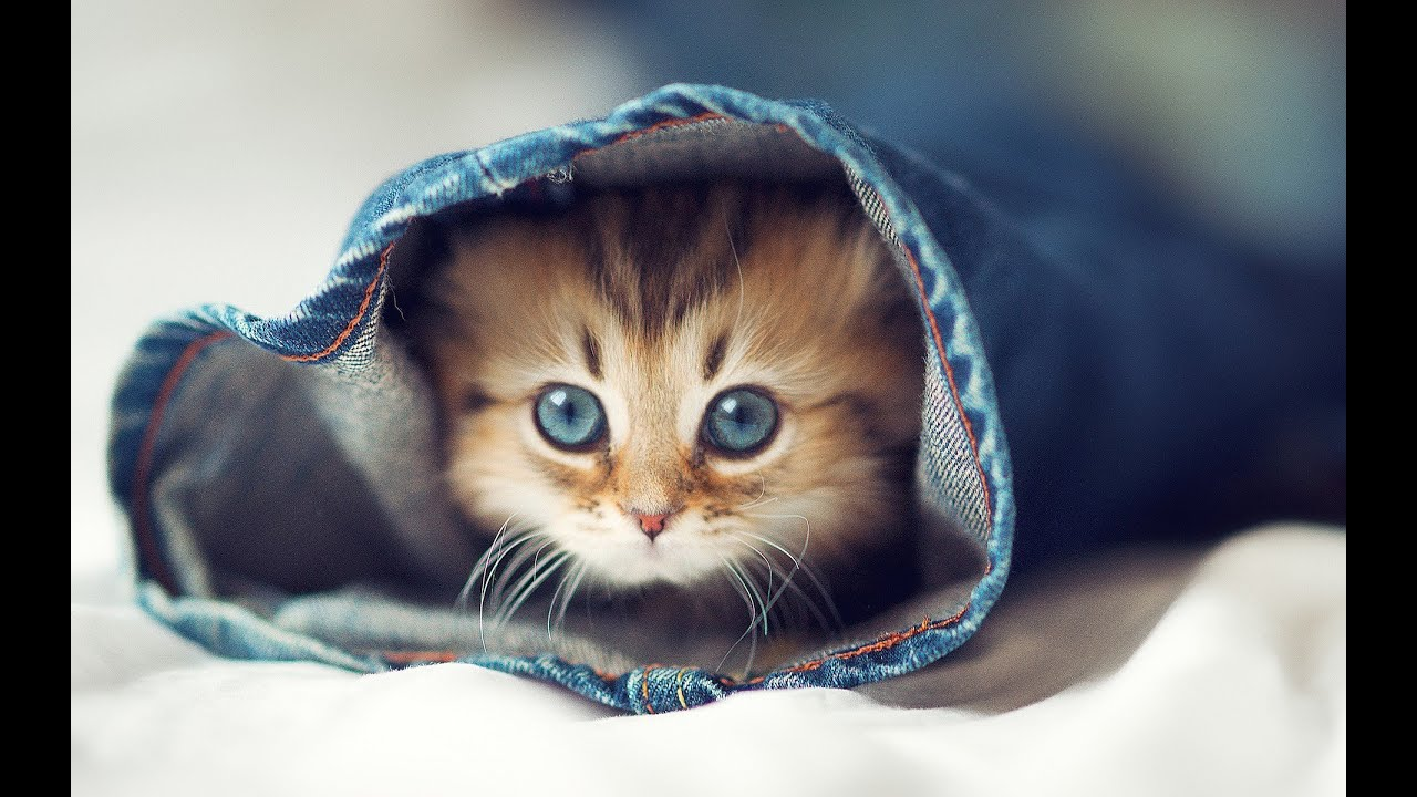Cute Cats — Cutest Kitten ☆ Best pilation Ever ღ