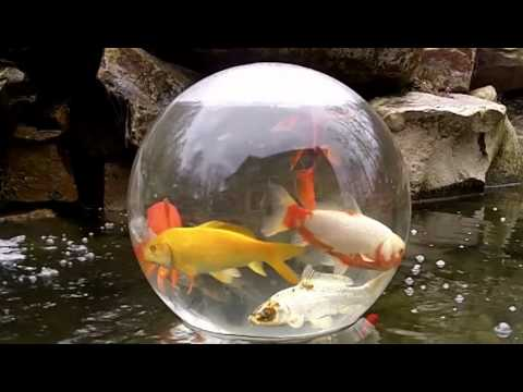 Add a sphere daytime video youtube for Koi pond bubble