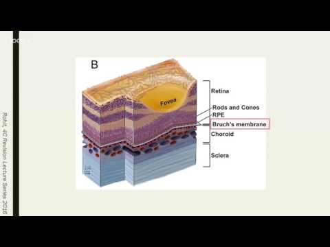Y4C Revision Lecture #7 - Ophthalmology by Rohit Sharma