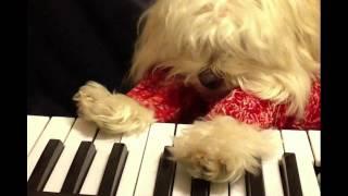 Play Him Off Keyboard Dog *maxx*