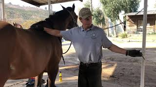 Danny Arrand: The Horse Shoeing Process