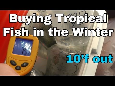 Buying TROPICAL fish in the WINTER