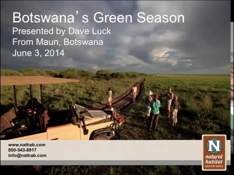 WEBINAR | Botswana Bursts to Life: A Green Season Photo Safari