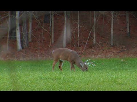 Food Plot Whitetails