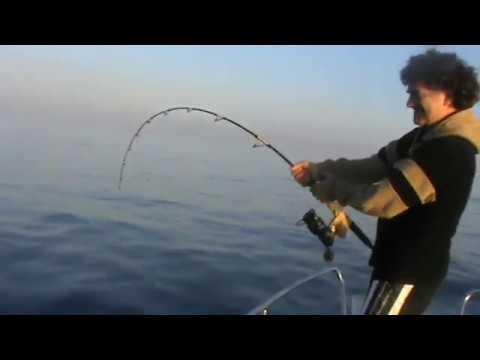combattimento con un grande tonno