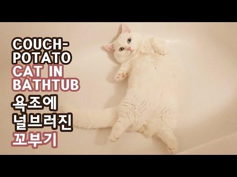 욕조에 널브러진 귀요미 고양이 - 꼬부기 1살+6개월 Cat Gato ねこ 短足猫