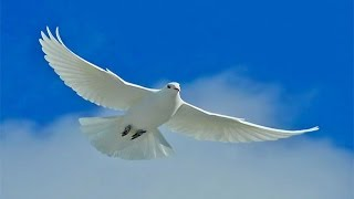 Андрей Губин - Птица   ✔