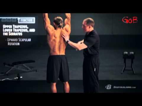 Созданный наукой  Спина дубляж канала Generation Of Bodybuilding