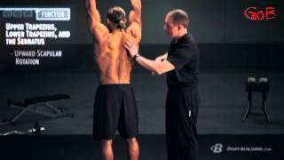 видео Анатомия бодибилдинга