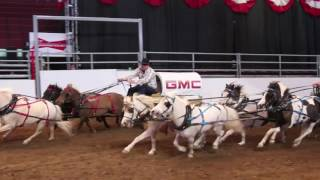 Mini Chuckwagons - Calgary Stampede 2016