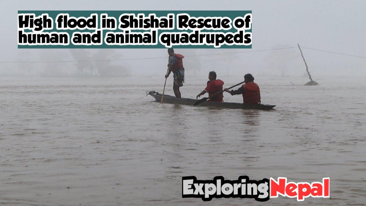 Download Narayani Heavy Flood|नारायणी नदिमा उच्च बाढी||Shishai In High Risk #exploringnepal