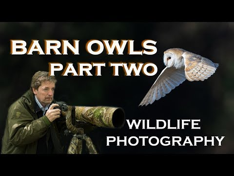WILDLIFE PHOTOGRAPHY:  BARN OWLS:  (Part Two)