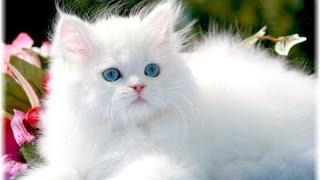 قطط جميلة ستدهشك بجمالها funny cats