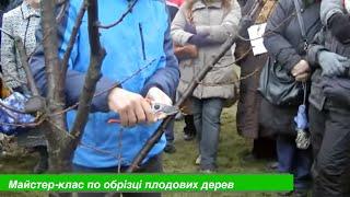 Мастер-класс по обрезке плодовых деревьев.(Консультации садоводам., 2015-05-08T20:51:09.000Z)