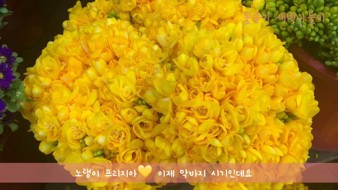 [레디액션_가은] 꽃순이  꽃시장 새벽나들이 브이로그
