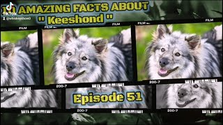 Top 10 amazing facts about Keeshond. #whiskey #pug #dog