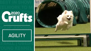 Watch Fling the German Spitz smash the agility course | ​Crufts 2020