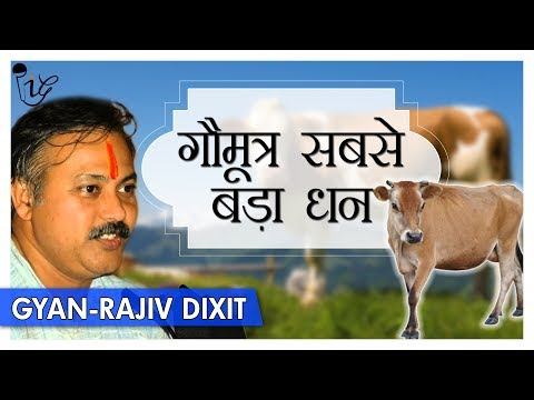 गौमूत्र सबसे बड़ा धन | Benefits Of Cow urine (Gaumutra) Explained by Rajiv Dixit