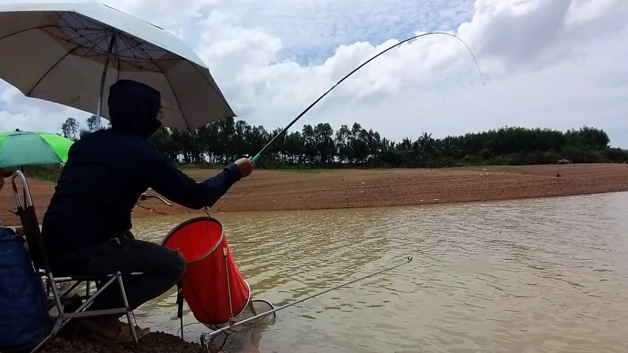 Câu cá sông . Cá đang ăn mạnh thì trời mưa .