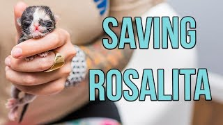 Saving a One-Day-Old Kitten, Rosalita!