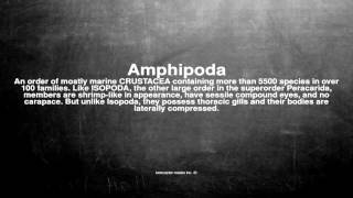 Medical vocabulary: What does Amphipoda mean