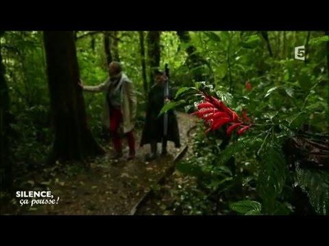 Rencontre : producteur de légumes bio du Costa Rica  - Silence ça pousse