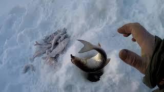 Ямал Река Етыпур Вкусные поклевки хитрой рыбы