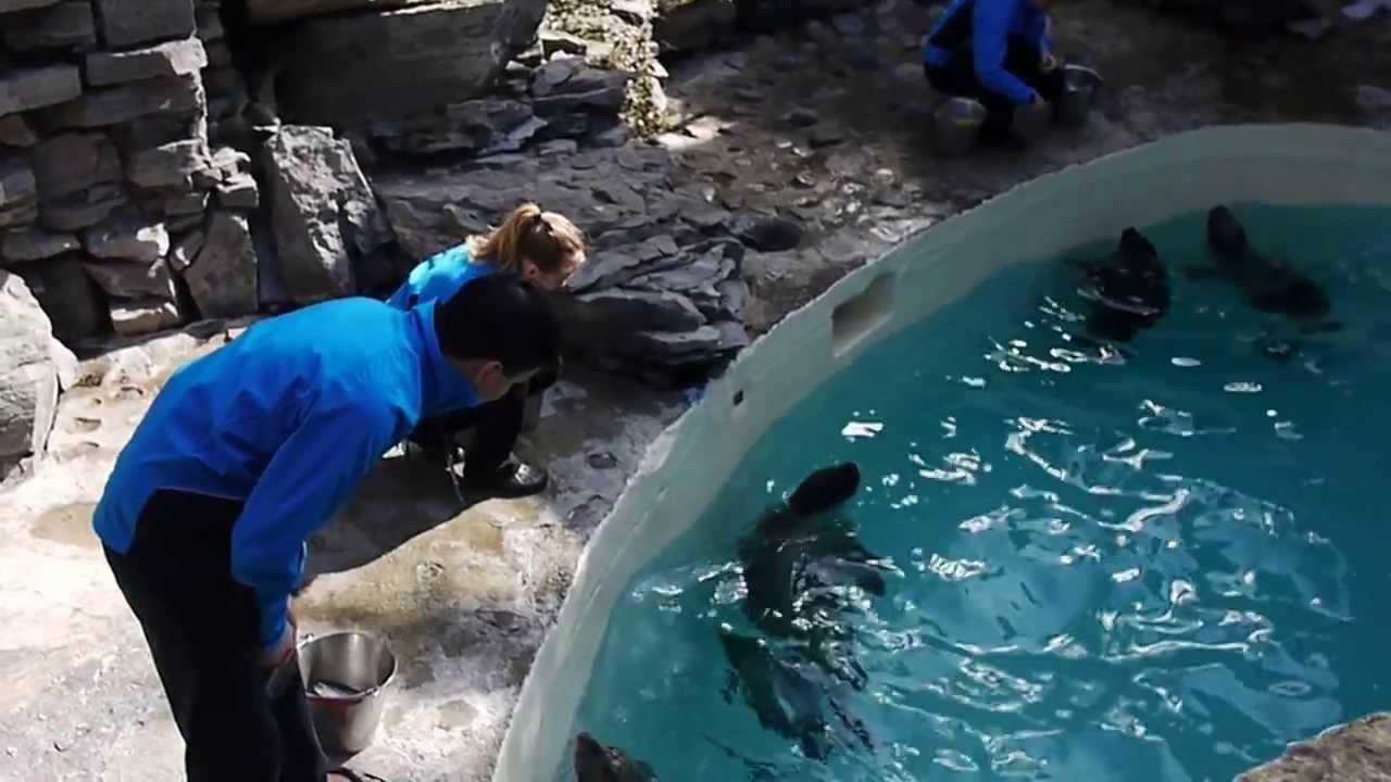 Seal At Niagara Falls Aquarium Youtube