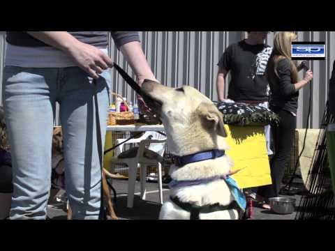 Pet Adoption HF